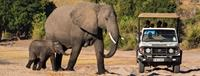 Elephants on African Safari in Namibia