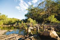 Barramundi_Creek_Kakadu-small(2)
