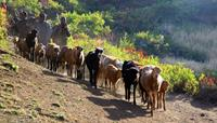 Ethiopian herders with their cattle - World Expeditions Ethiopia Walking Holiday