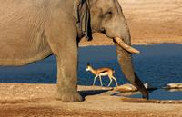 Etosha_National_Park_Namibia_Africa-medium