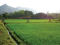 Cycling through rice paddies in Northern Vietnam