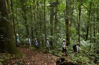 Scenic_Rim_Trail_Rainforest-medium