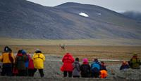 Group of people watching a reindeer on Wrangel Island - (c) MKelly
