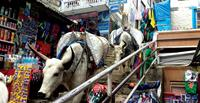 Yaks in Namche Bazaar on World Expeditions Everest Base Camp trek