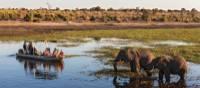 Wildlife viewing in Chobe River | Peter Walton