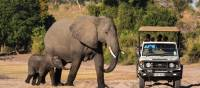 Game drive in Chobe National Park | Peter Walton