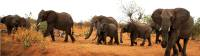 Elephant herd in the Namibian desert |  <i>Gesine Cheung</i>