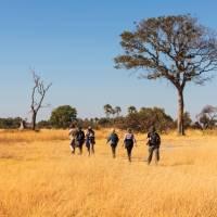 Walking in the Okavango Delta | Peter Walton