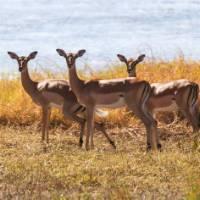 The stunning wildlife rolling around the Okavango River | Peter Walton