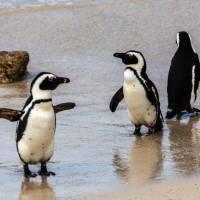 Wildlife along the Indian Ocean coastline | Peter Walton