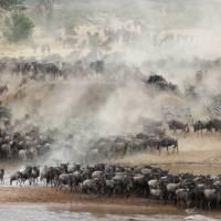 Breathtaking wildebeest migration though the Serengeti | Kyle Super