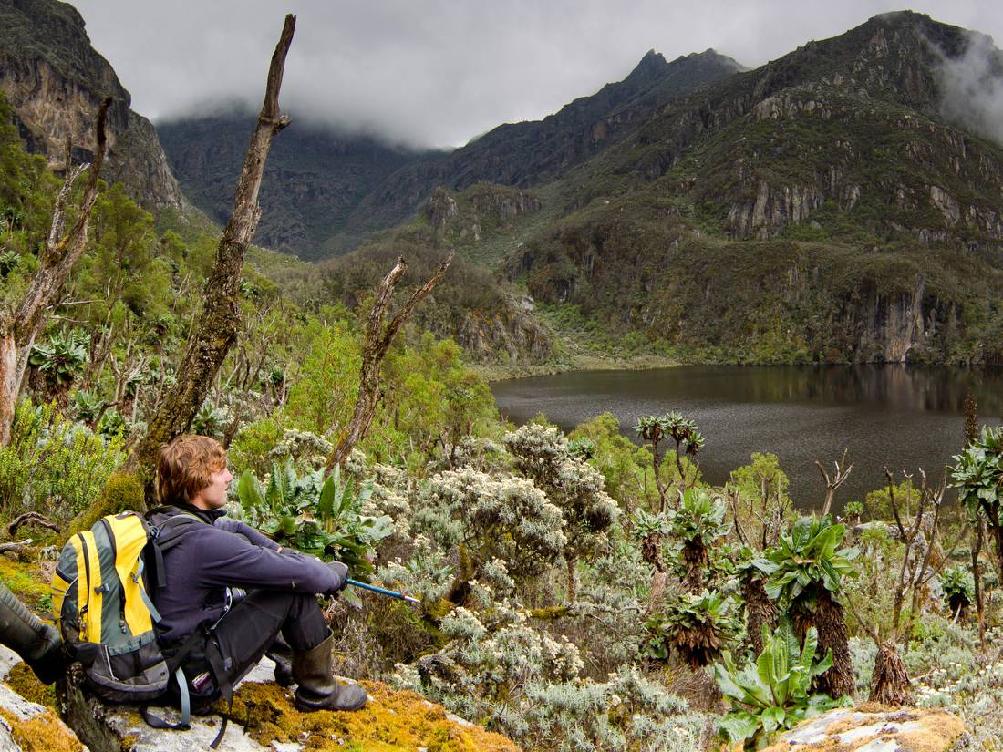 High in the Afro alpine zone of the Rwenzori National Park |  <i>Morgan Trimble</i>