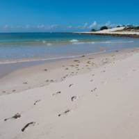 Footprints along the coast of Mozambique | Bruce Taylor