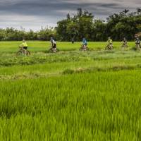 Rice paddy cycling in Vietnam | Richard I'Anson