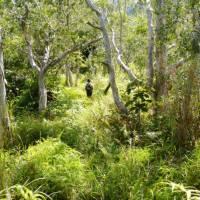 Head deep into the New Caledonian forest on our stunning trek between Kanak villages