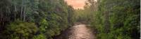 The pristine wilderness of the Franklin River |  <i>Glenn Walker</i>