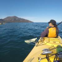 Kayaking on Coles Bay, with the Hazards in the distance |  <i>Brad Atwal</i>