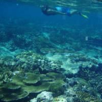Stunning coral gardens | Blake Reid