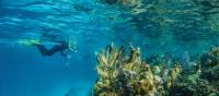 Submerged underwater is the best way to view Lighthouse Reef