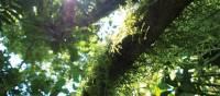 Lush rainforest, Arenal, Costa Rica | Sophie Panton