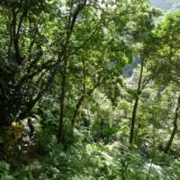 A trekker deep in the jungle on segment three of the Waitukubuli National Trail in Dominica.