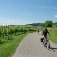 Cycling past vineyards in the Alsace region of France
