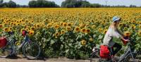 Cycling past a field of sunflowers in Hungary | Lilly Donkers