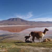 Laguna Colorada | Michel Noel
