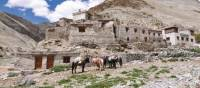 Markha Valley, Ladakh | Adam Mussolum