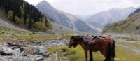 Exploring the verdant mountains in Kashmir | Charles Duncombe