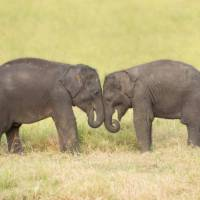 Visiting orphan baby elephants in Udawalawe   Houndstooth Studio by Alex Cearns
