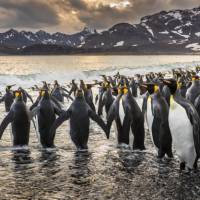 South Georgia's breathtaking scenery and huge numbers of wildlife make it a 'must see' | Richard I'Anson