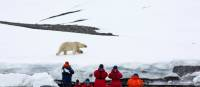 Wildlife observation in the High Arctic