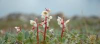 Delicate Northern Arctic flora | Fiona Windon