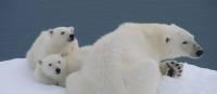 Polar Bears in Spitsbergen | Elaine Clueit