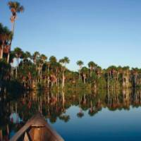 Cruising along the Amazon is the ideal way to spot wildlife | Bert Lozey