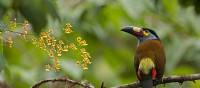 Bird in Bellavista Parc on our Ecuador Experience | Xavier Amigo