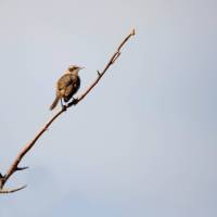 A Darwin finch in the Galapagos Islands | Alex Cearns | Houndstooth Studios