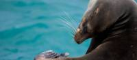 Galapagos Islands is home to a large number of sea lions | Alex Cearns