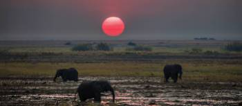 Breathtaking sunset over the African plains | Peter Walton