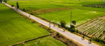 Explore the Mekong Delta fields by bike