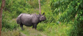 The majestic Asiatic Rhino | Zac Kostos