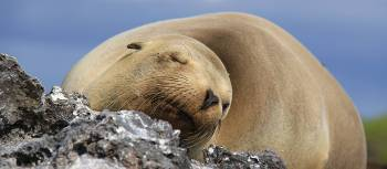 Sea Lion in the Galapagos islands | Ken Harris